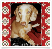 Patches Gretchen - AKC Dapple Piebald Smooth Coat Female